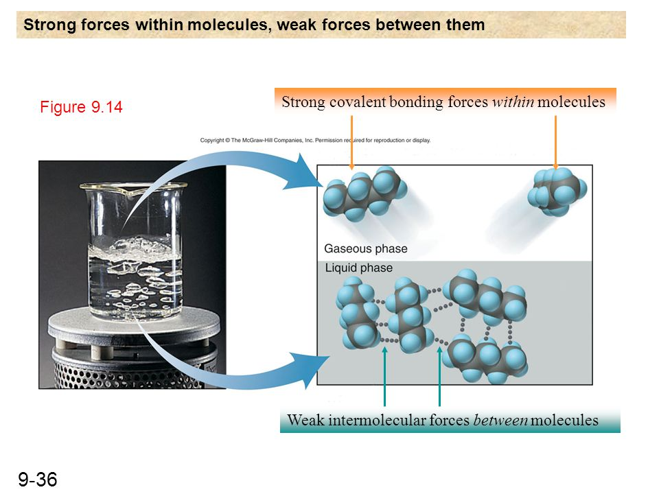 Strong forces within molecules, weak forces between them