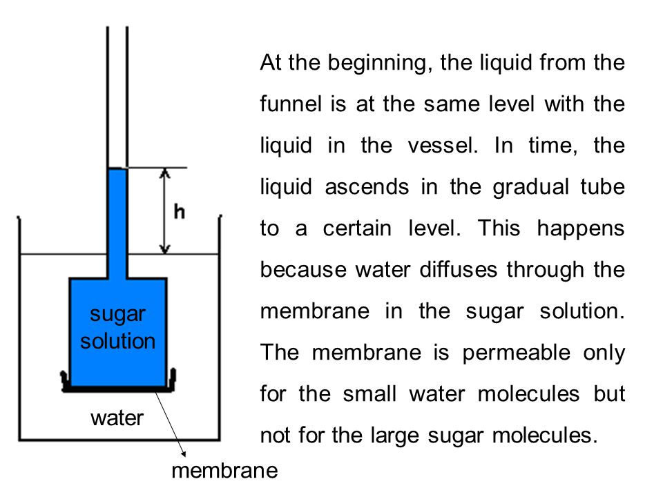 sugar solution water.