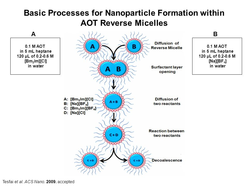 Basic Processes for Nanoparticle Formation within AOT Reverse Micelles