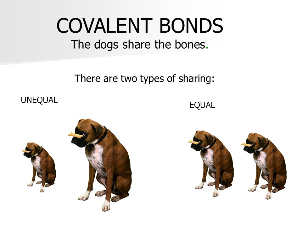 COVALENT BONDS The dogs share the bones.