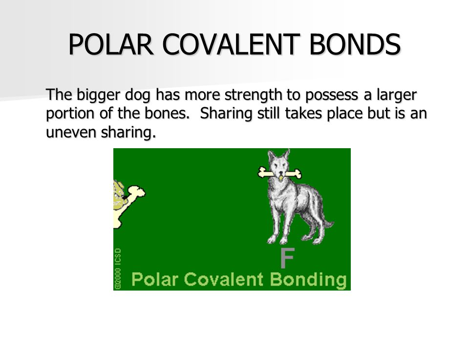 POLAR COVALENT BONDS The bigger dog has more strength to possess a larger portion of the bones. Sharing still takes place but is an uneven sharing.