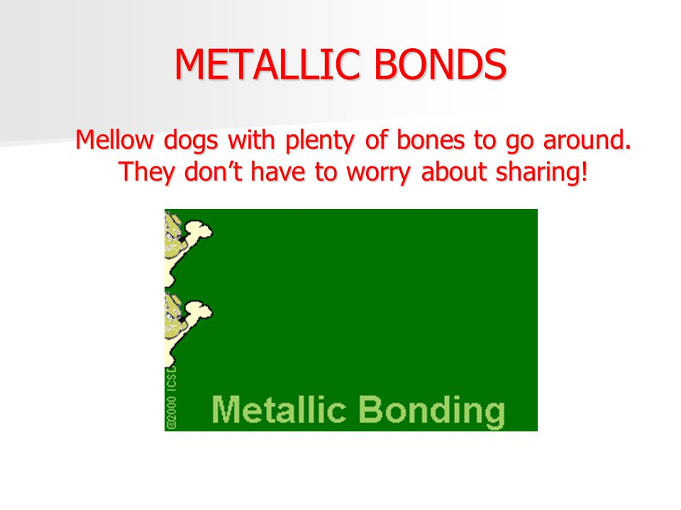 METALLIC BONDS Mellow dogs with plenty of bones to go around.