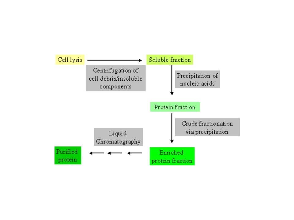 General flowchart for protein purification.