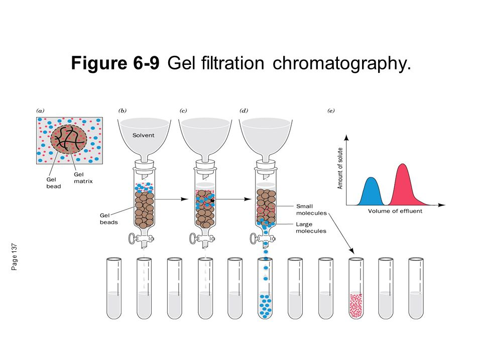 Figure 6-9 Gel filtration chromatography.