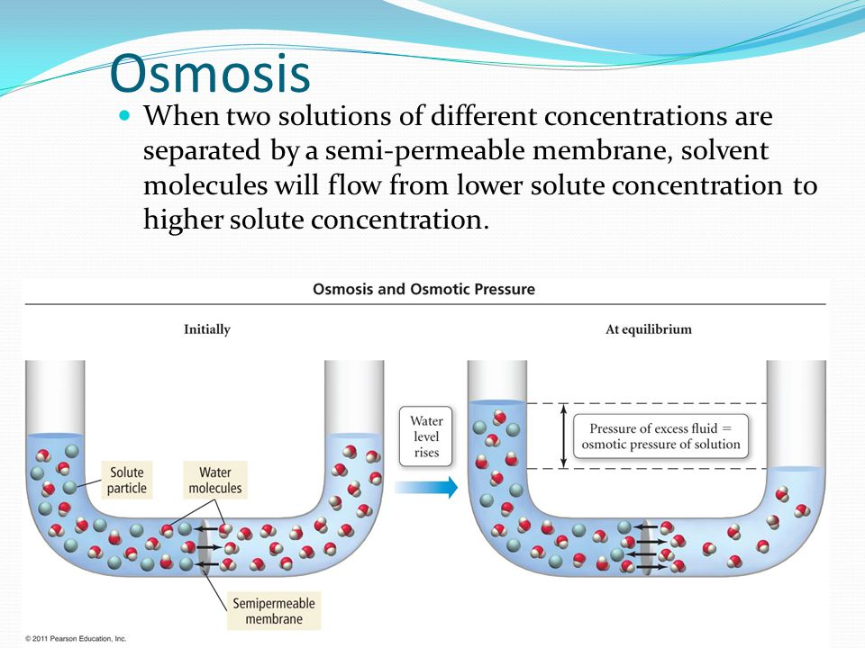 How Does the Concentration of a Solution Affect Osmosis?