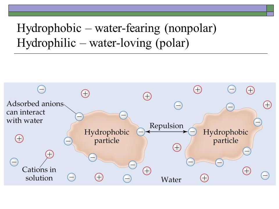 Hydrophobic – water-fearing (nonpolar) Hydrophilic – water-loving (polar)