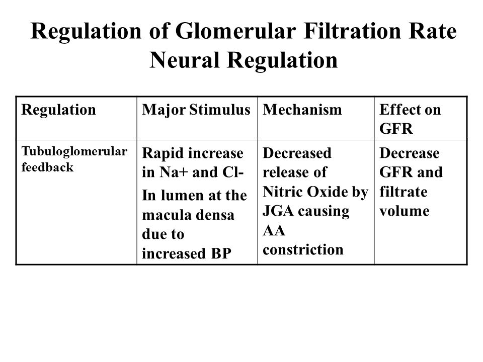 Regulation of Glomerular Filtration Rate Neural Regulation