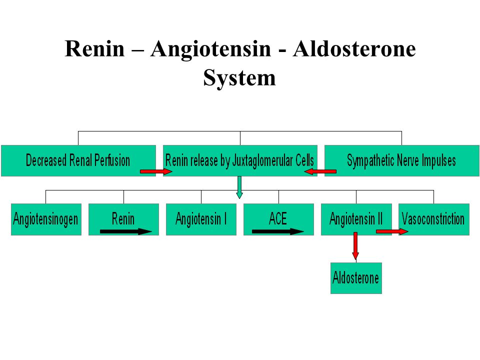 Renin – Angiotensin - Aldosterone System