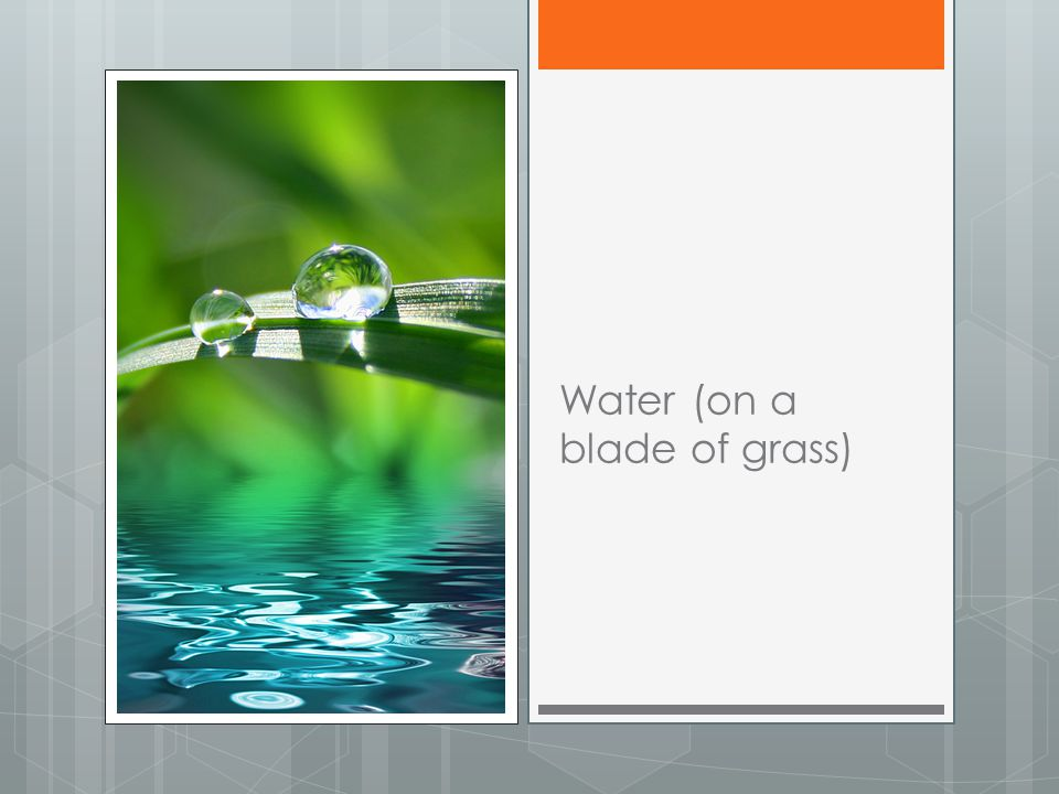 Water (on a blade of grass)