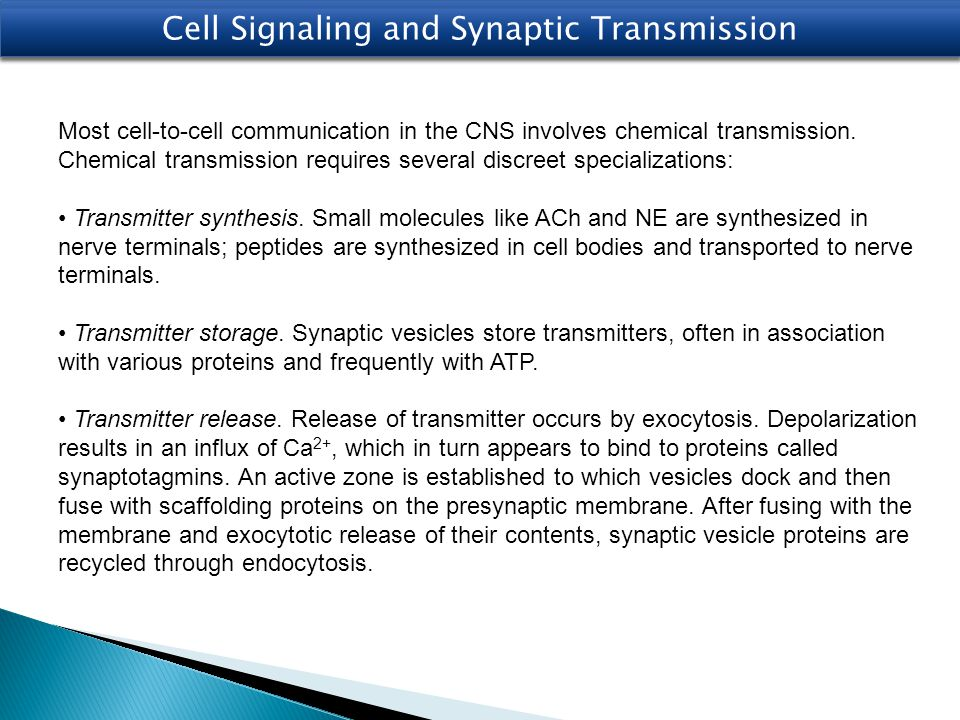 Cell Signaling and Synaptic Transmission