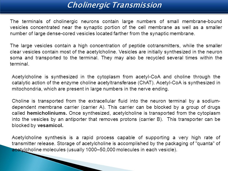 Cholinergic Transmission