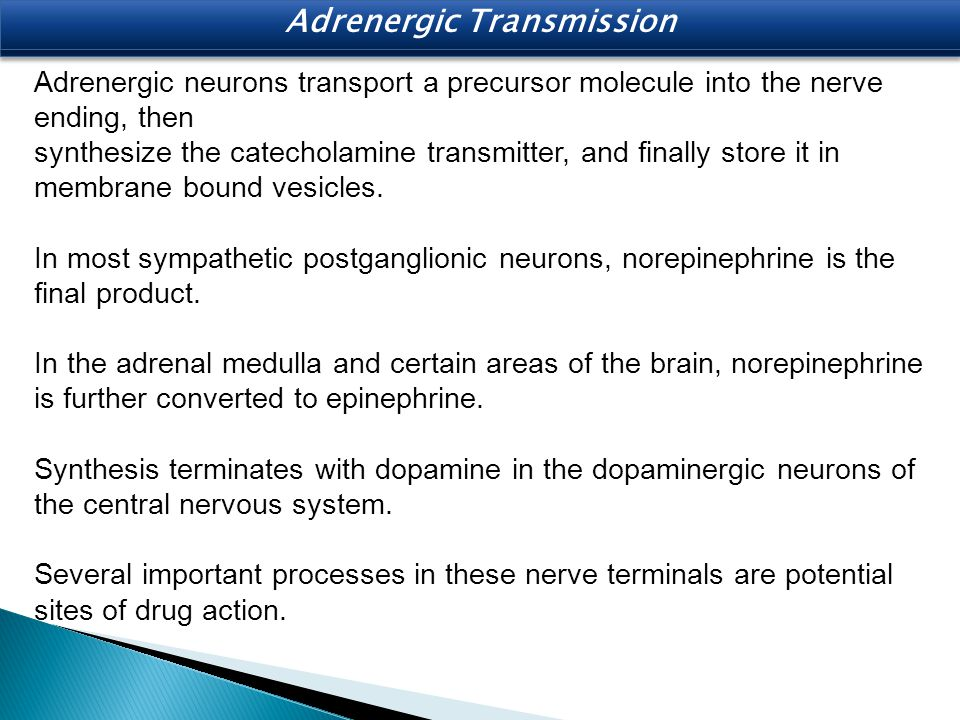 Adrenergic Transmission