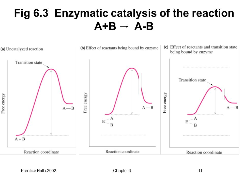 Fig 6.3 Enzymatic catalysis of the reaction A+B A-B