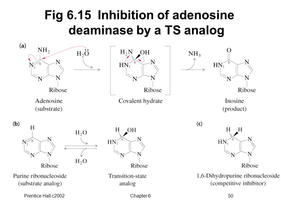 Fig 6.15 Inhibition of adenosine deaminase by a TS analog