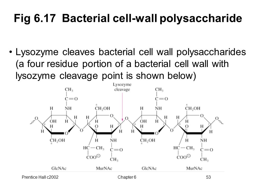 Fig 6.17 Bacterial cell-wall polysaccharide