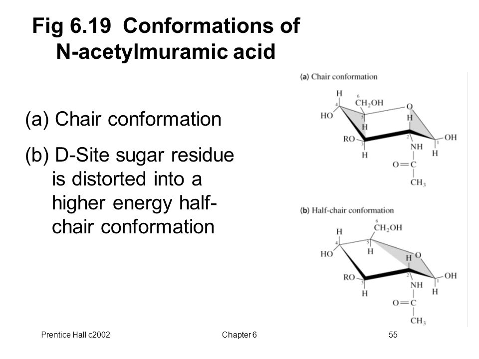 Fig 6.19 Conformations of N-acetylmuramic acid