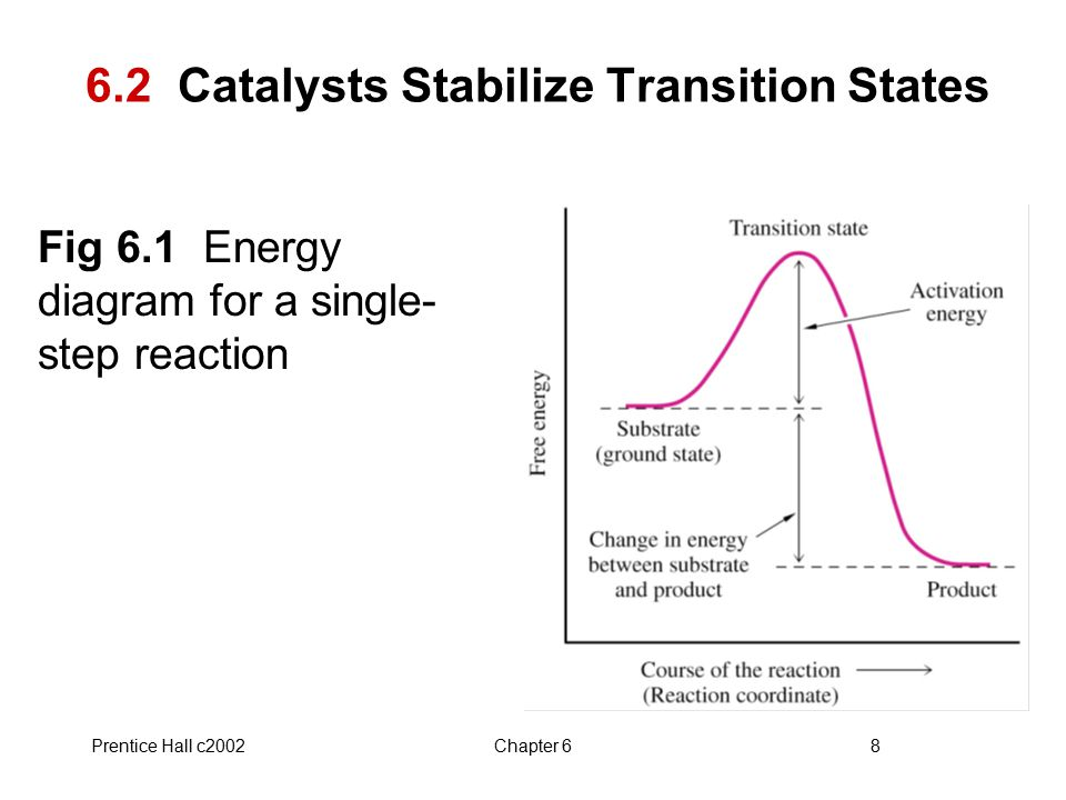 6.2 Catalysts Stabilize Transition States