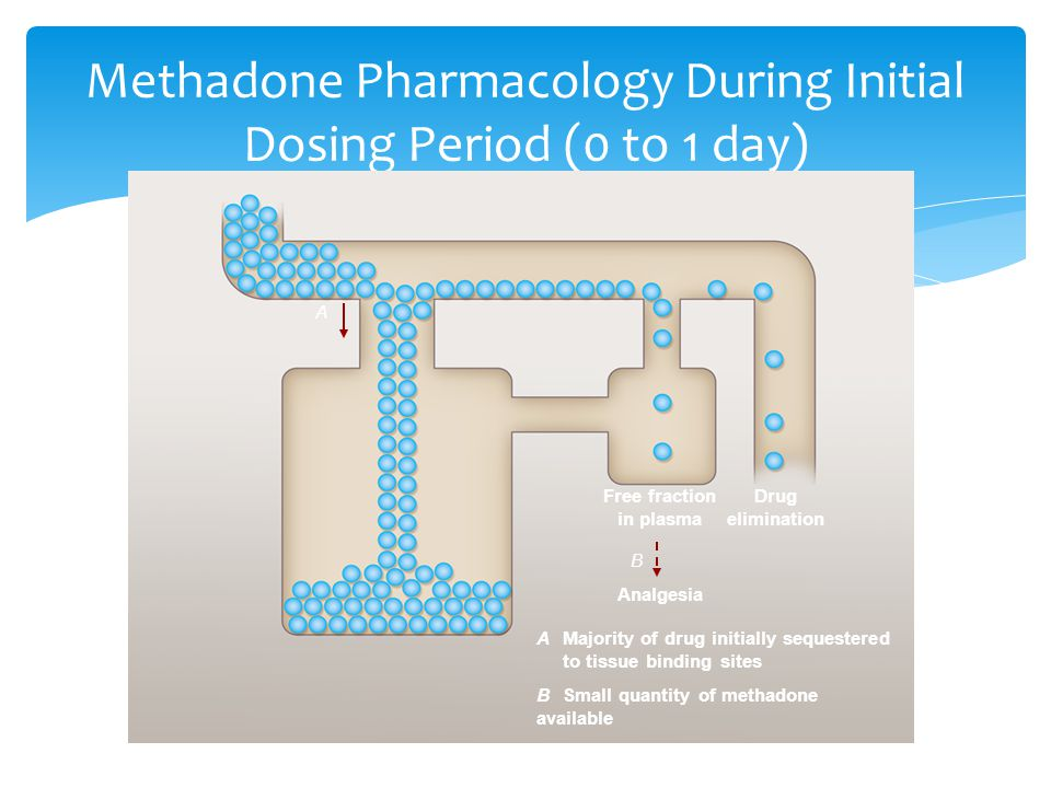 Methadone Pharmacology During Initial Dosing Period (0 to 1 day)