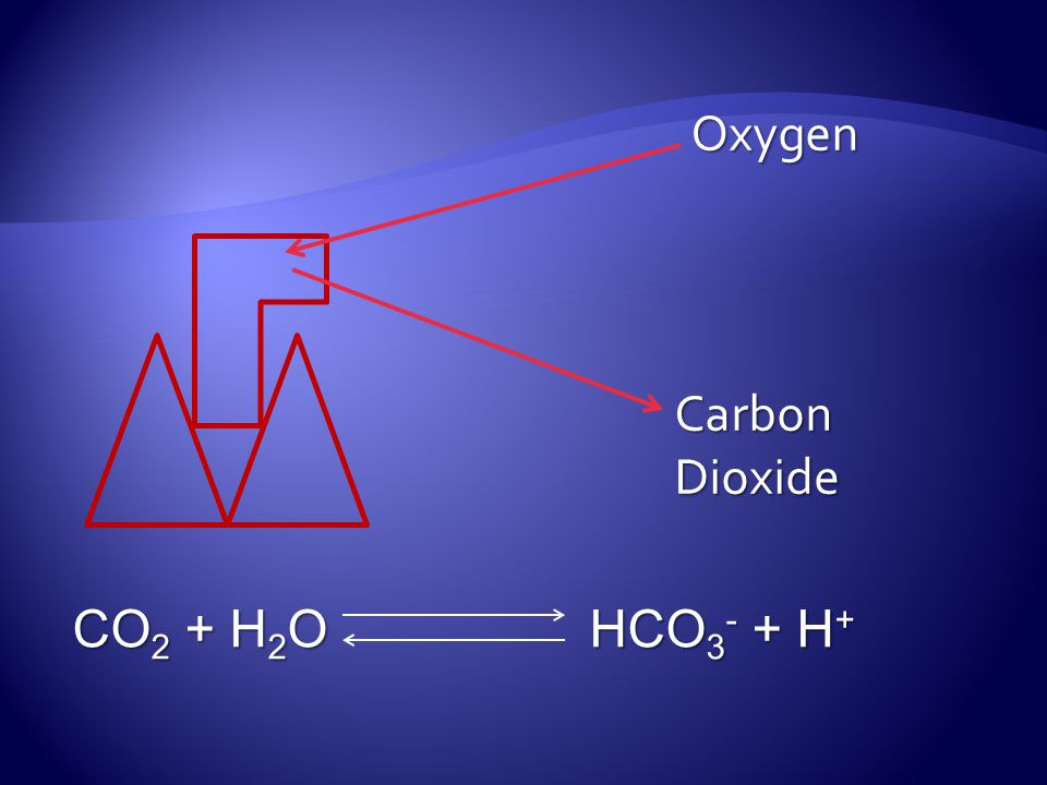 Oxygen Carbon Dioxide CO2 + H2O HCO3- + H+