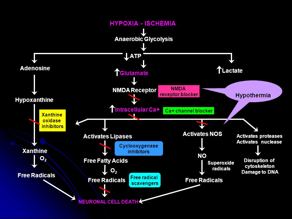 HYPOXIA - ISCHEMIA Anaerobic Glycolysis ATP Adenosine Lactate