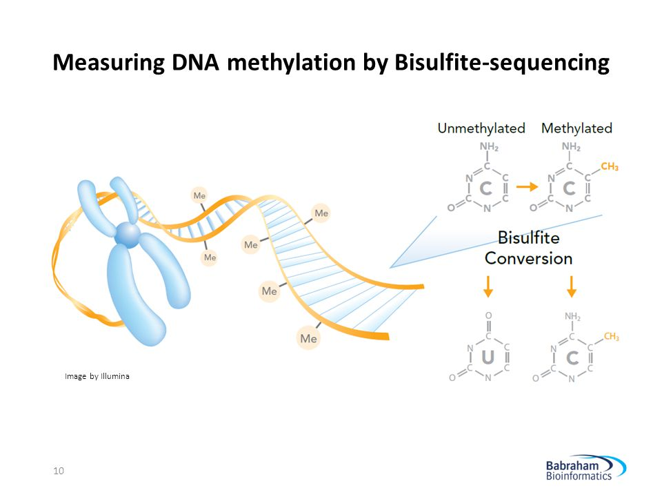 Measuring DNA methylation by Bisulfite-sequencing