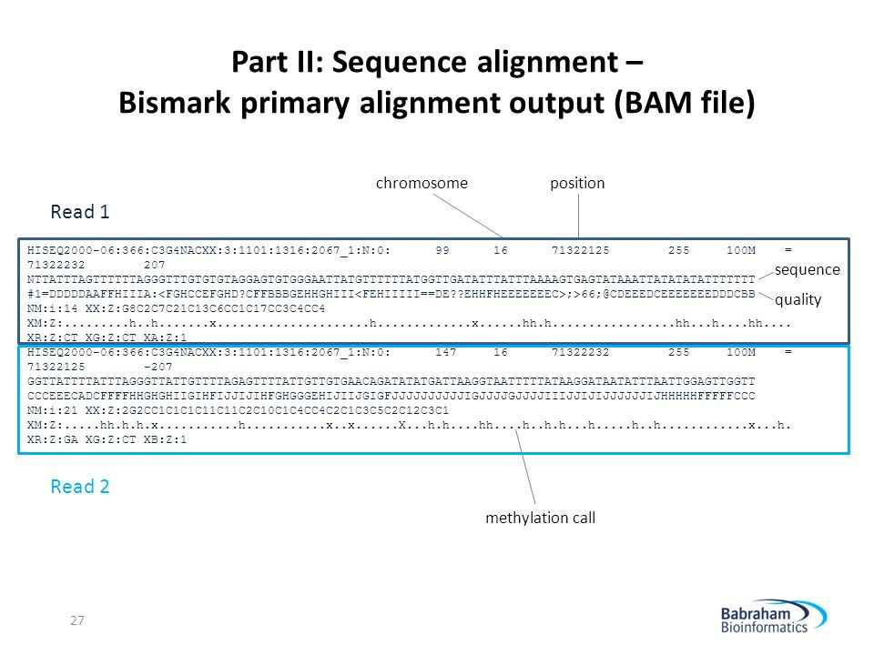 Part II: Sequence alignment – Bismark primary alignment output (BAM file)