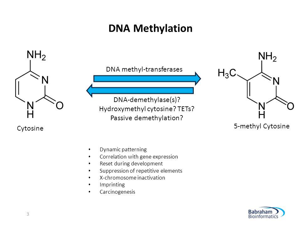 DNA Methylation DNA methyl-transferases DNA-demethylase(s)