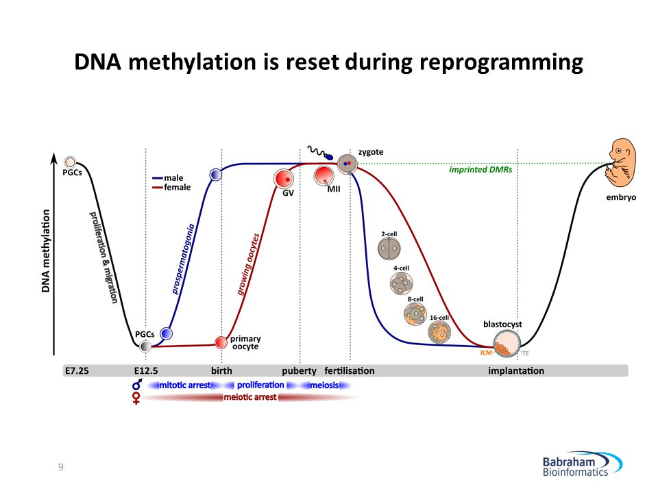 DNA methylation is reset during reprogramming