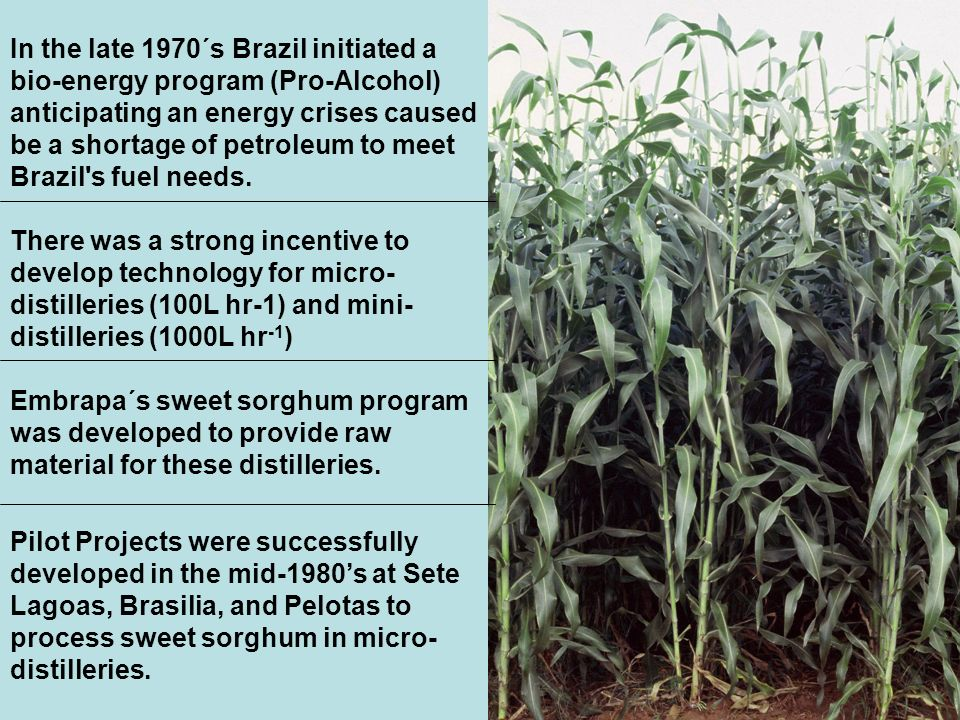 In the late 1970´s Brazil initiated a bio-energy program (Pro-Alcohol) anticipating an energy crises caused be a shortage of petroleum to meet Brazil s fuel needs.