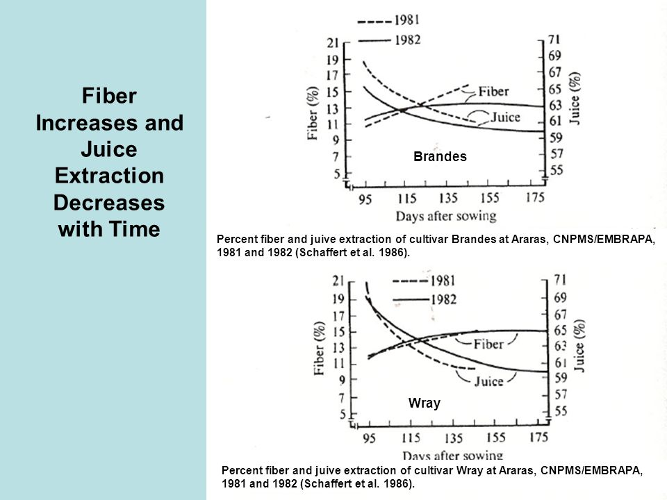 Fiber Increases and Juice Extraction Decreases with Time