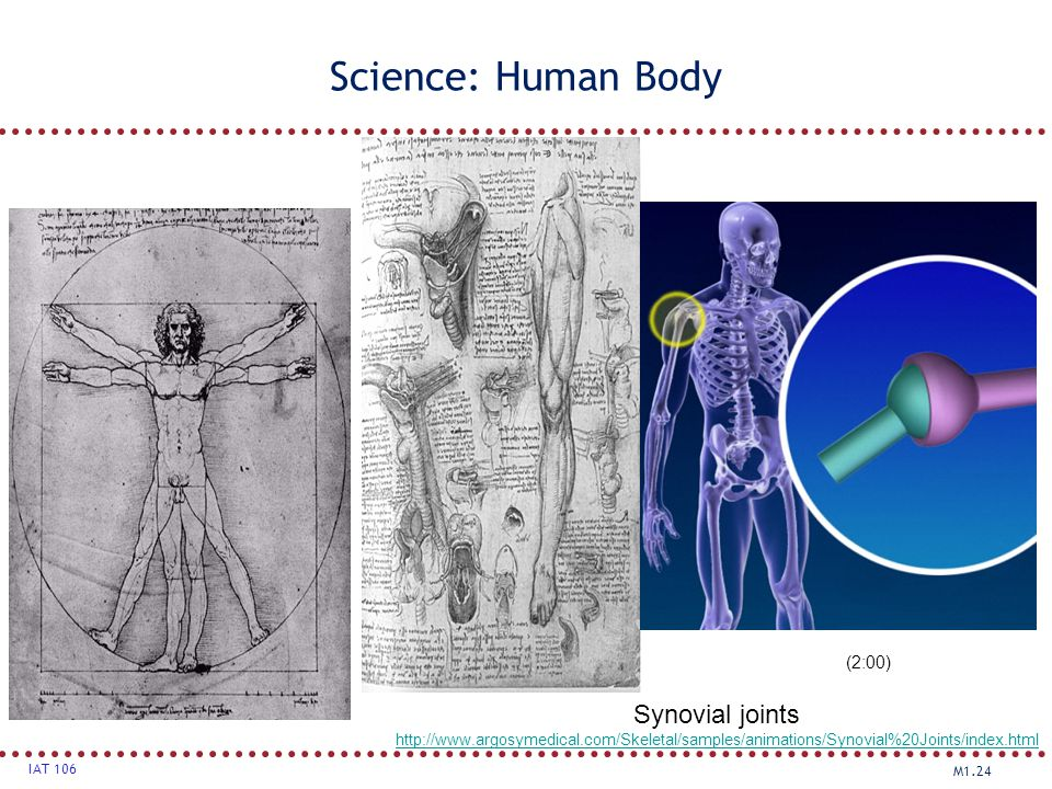 Science: Human Body Synovial joints (2:00)