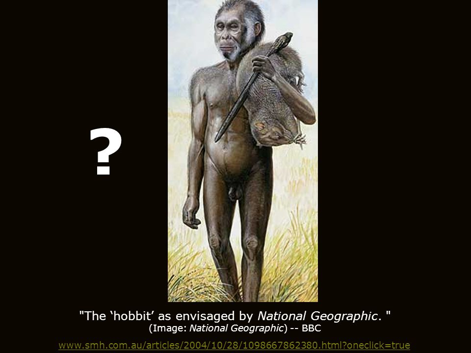 The 'hobbit' as envisaged by National Geographic.