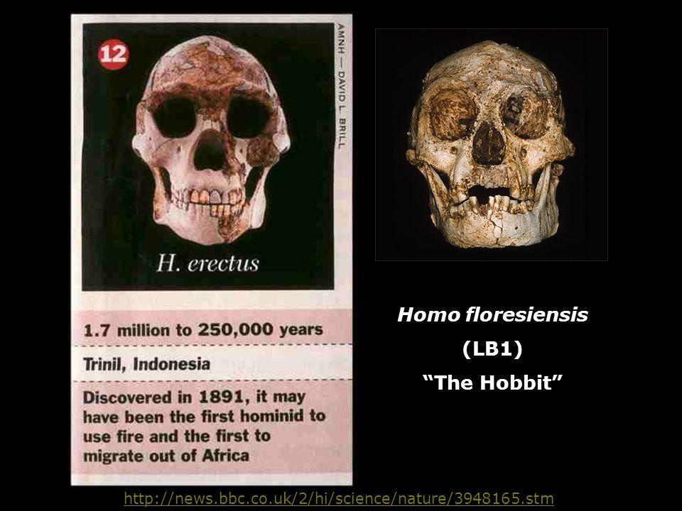 Homo floresiensis (LB1) The Hobbit