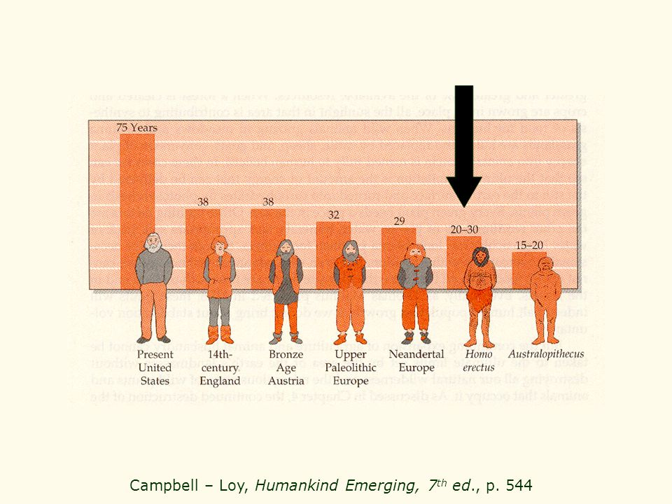 Campbell – Loy, Humankind Emerging, 7th ed., p. 544