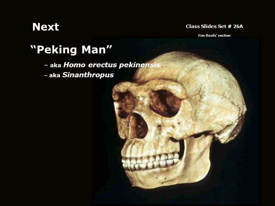 Next Peking Man aka Homo erectus pekinensis aka Sinanthropus
