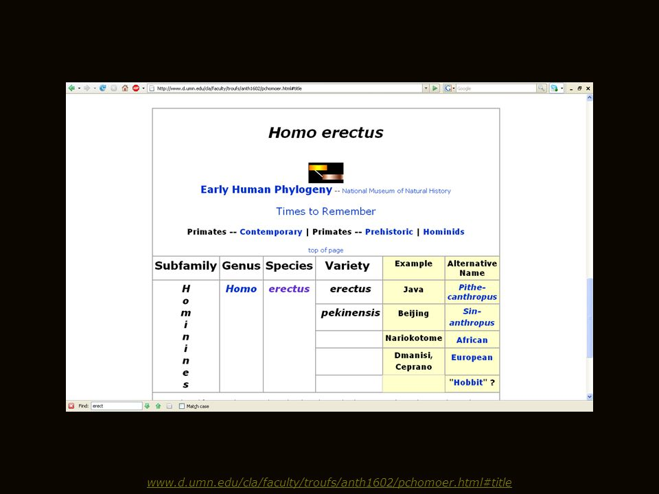 www.d.umn.edu/cla/faculty/troufs/anth1602/pchomoer.html#title
