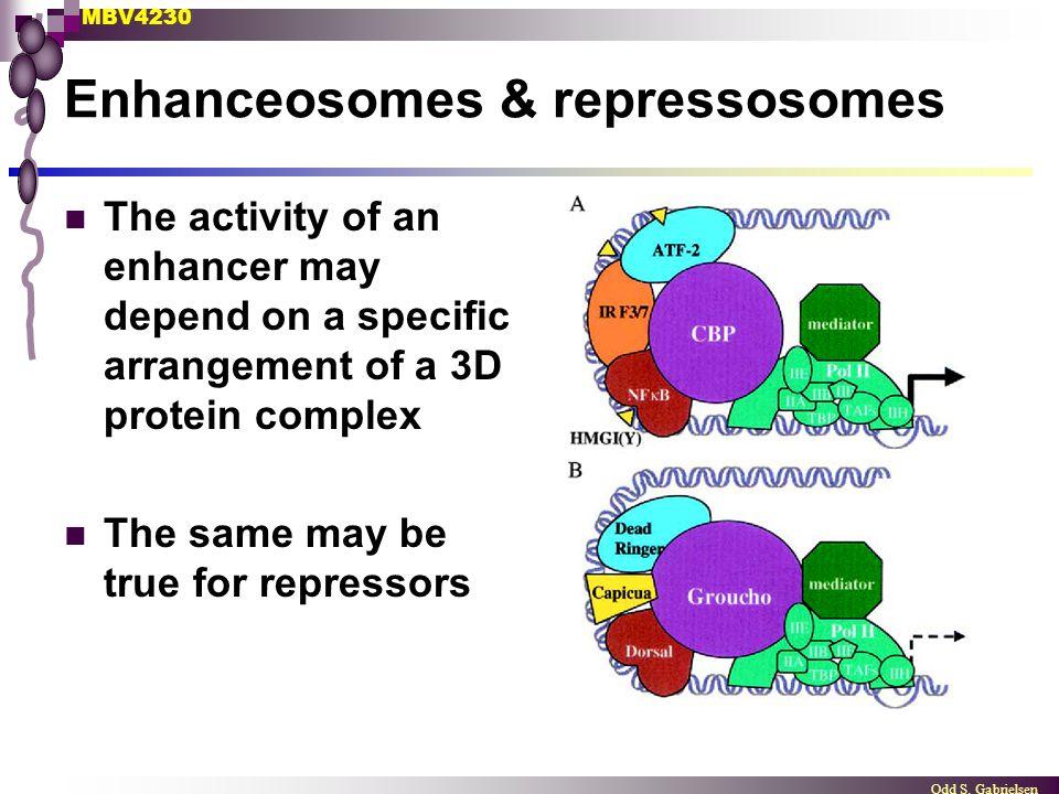 Enhanceosomes & repressosomes