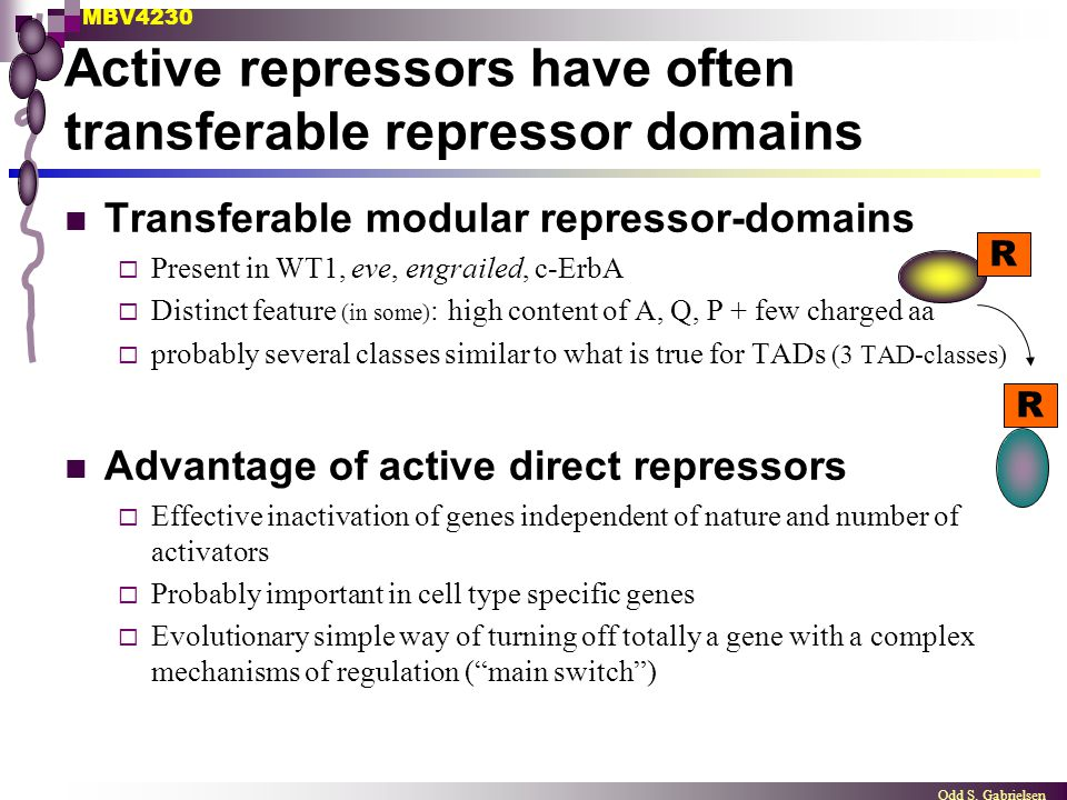 Active repressors have often transferable repressor domains