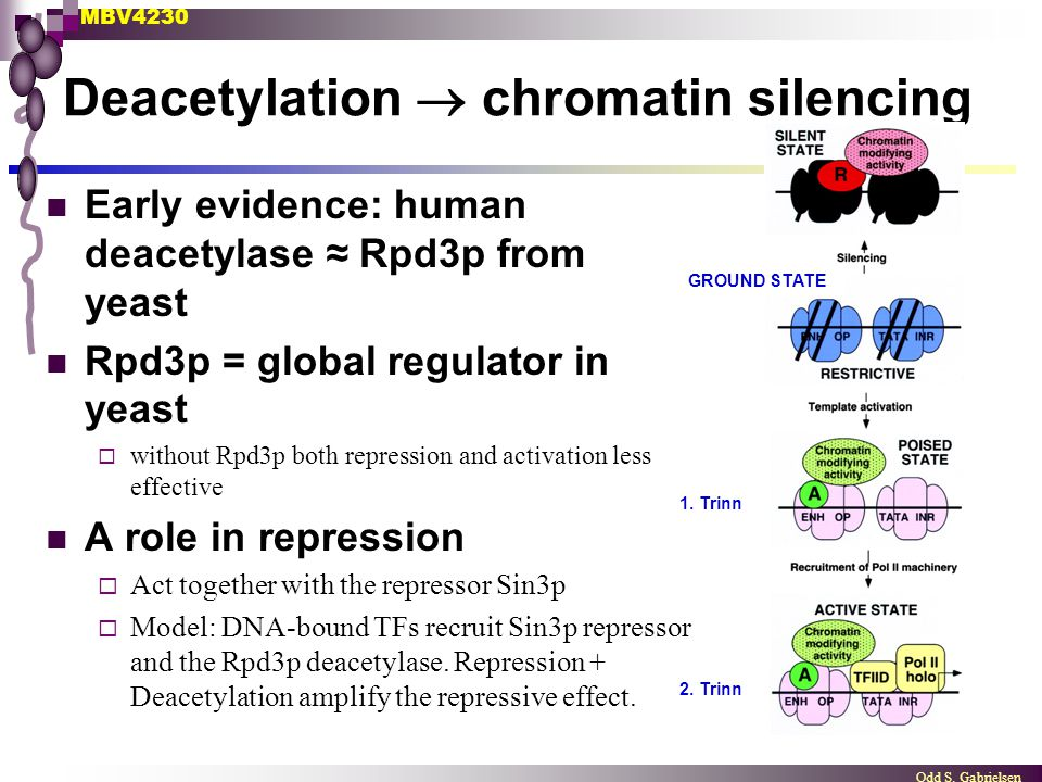 Deacetylation  chromatin silencing
