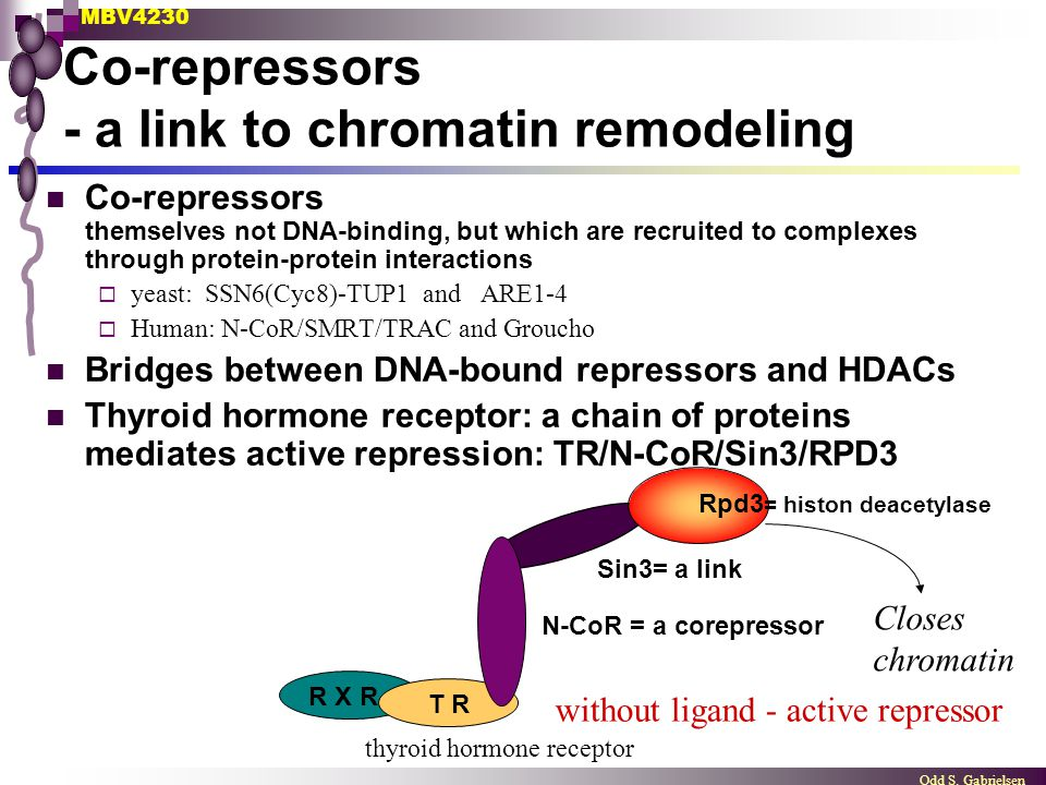 Co-repressors - a link to chromatin remodeling