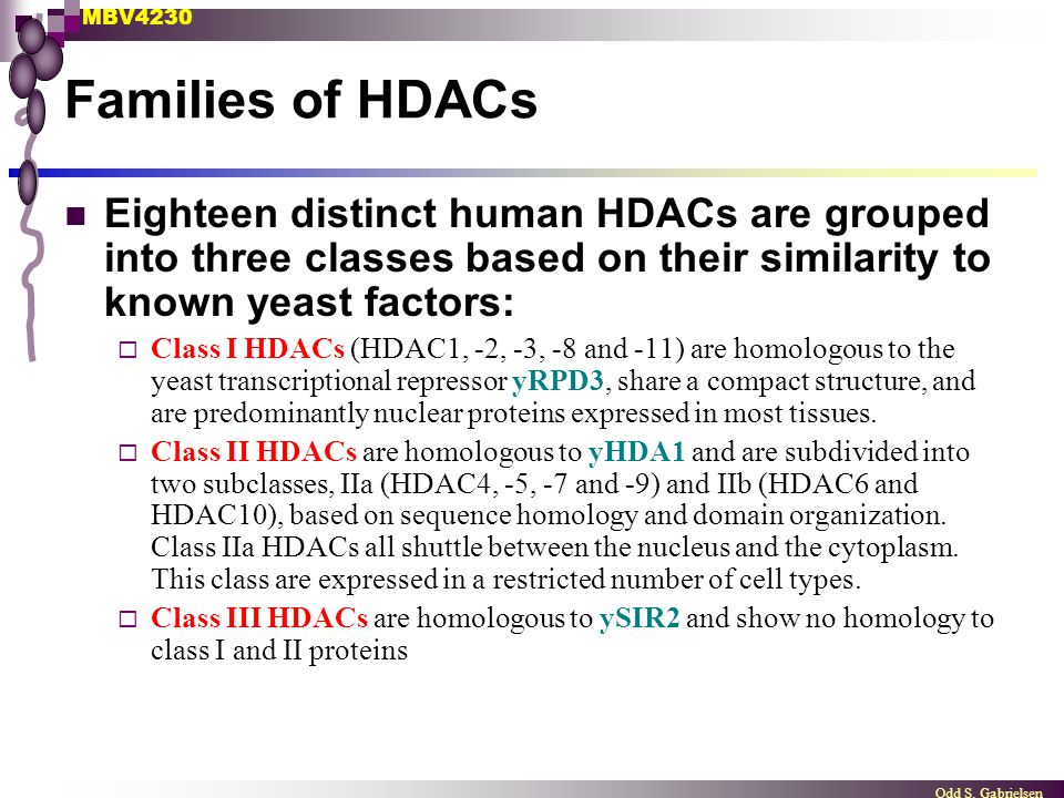 Families of HDACs Eighteen distinct human HDACs are grouped into three classes based on their similarity to known yeast factors: