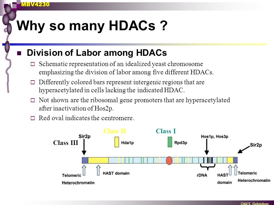 Why so many HDACs Division of Labor among HDACs