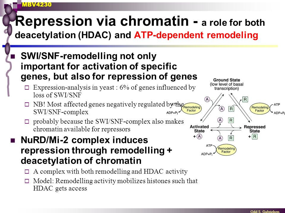 Repression via chromatin - a role for both deacetylation (HDAC) and ATP-dependent remodeling