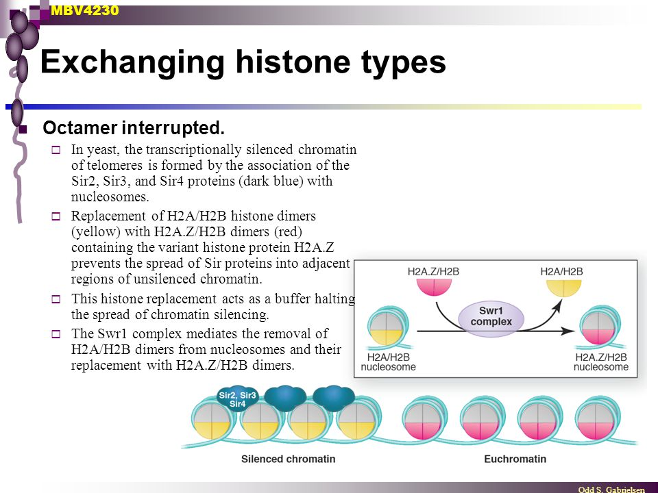 Exchanging histone types