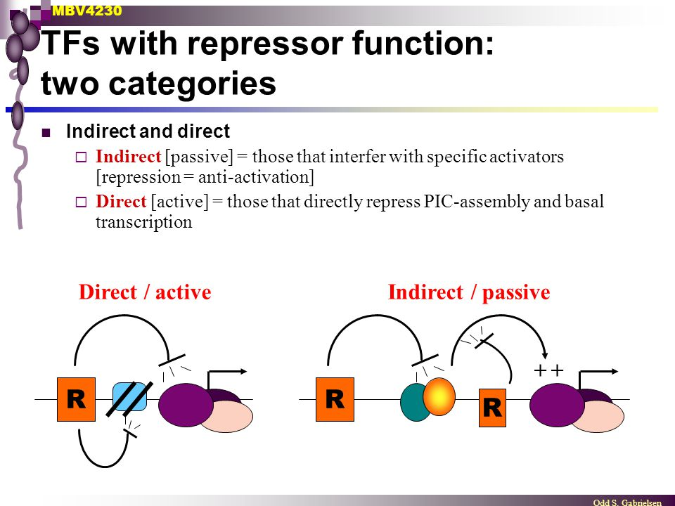 TFs with repressor function: two categories