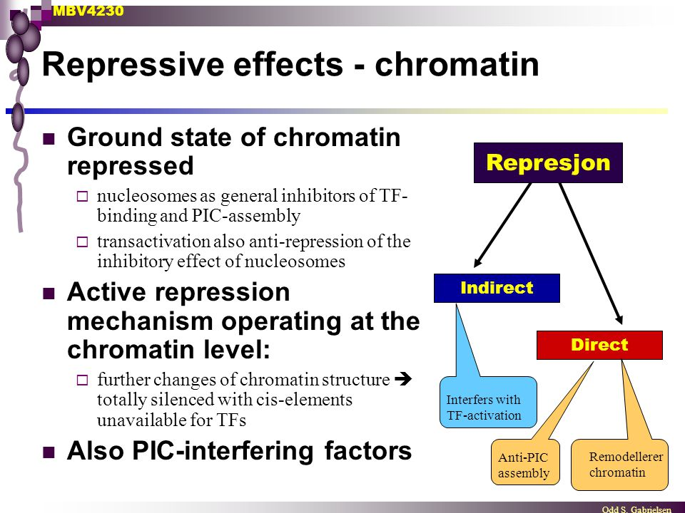 Repressive effects - chromatin