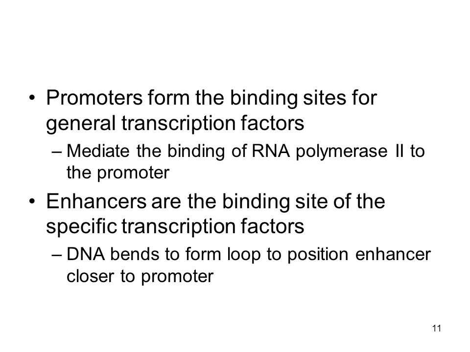 Promoters form the binding sites for general transcription factors