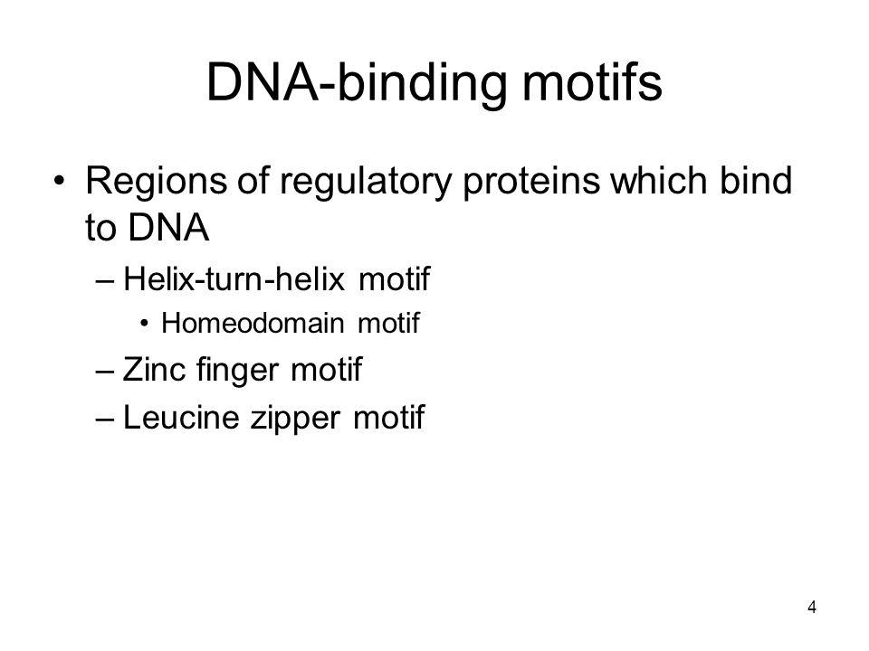 DNA-binding motifs Regions of regulatory proteins which bind to DNA