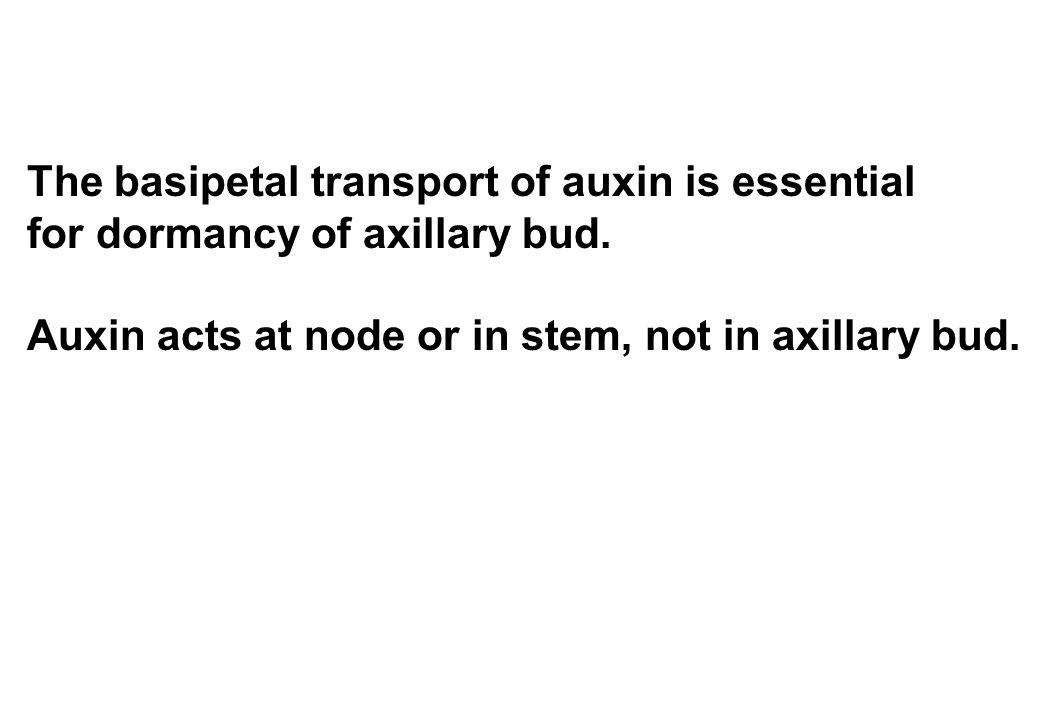 The basipetal transport of auxin is essential