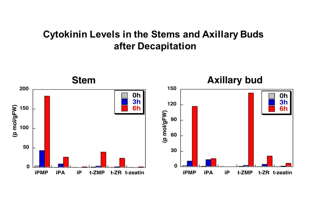 Cytokinin Levels in the Stems and Axillary Buds